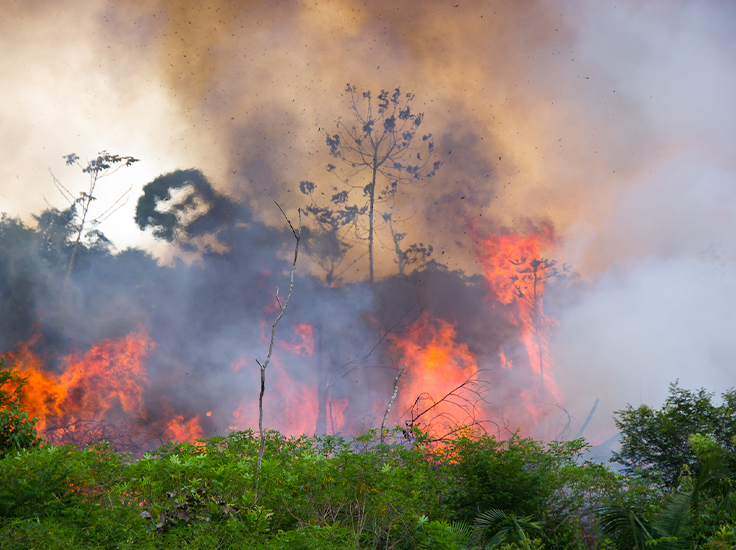 The Amazon Rainforest is burning