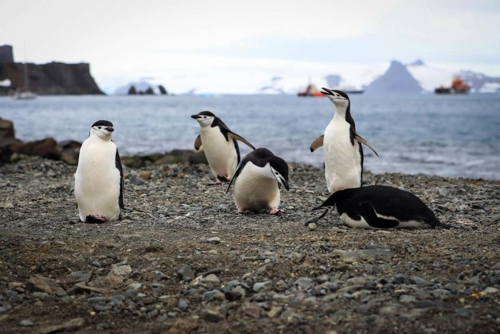 Antarctica is becoming a popular tourist destination – but the continent's delicate ecosystems are already suffering due to global warming. Federico Anfitti/EPA-EFE