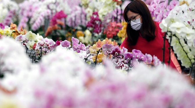 Woman wearing face mask looking at flowers