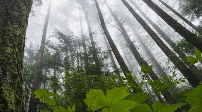 Forest, Greg Rosenke, Unsplash