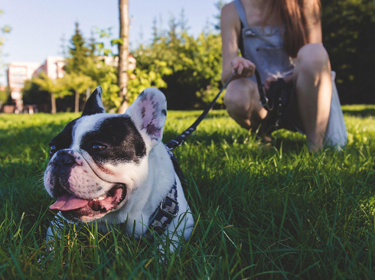 A dog lying in the grass