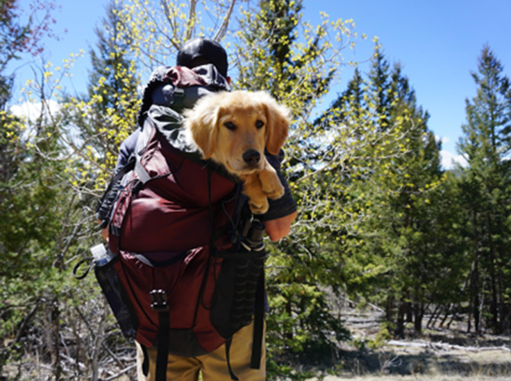 A man takes his dog on a hike