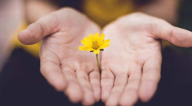 Hands with a yellow flower
