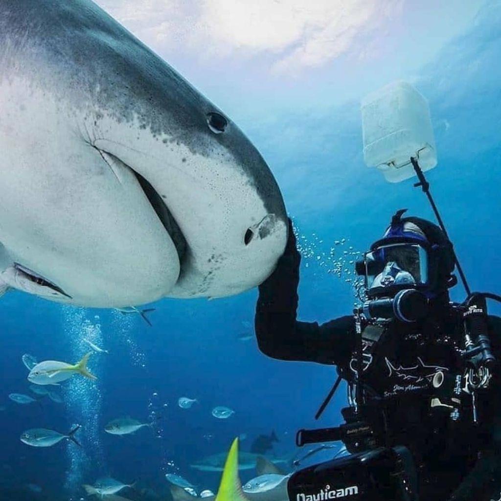 Jim Abernathy with Emma the tiger shark