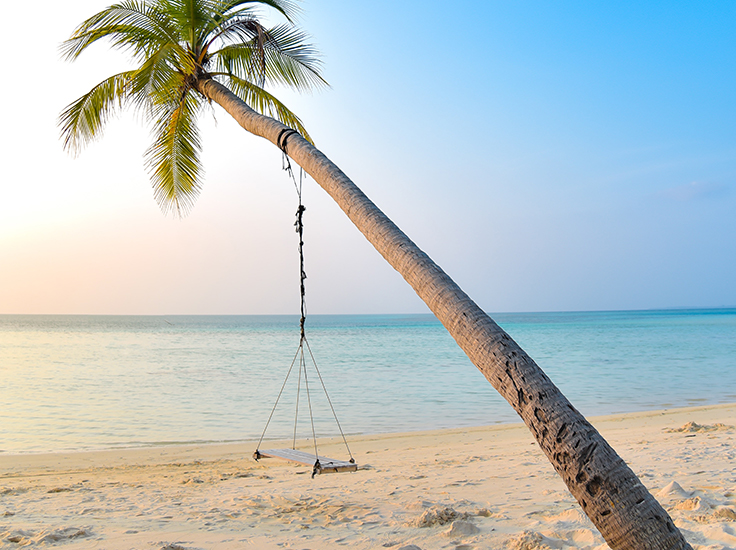 Palm tree and beach lounger