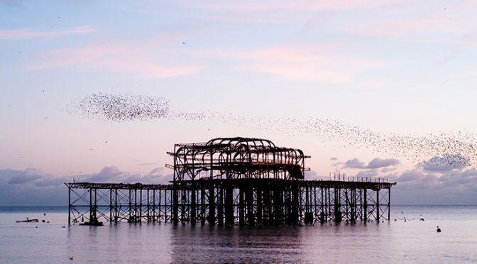 the murmuration of starlings