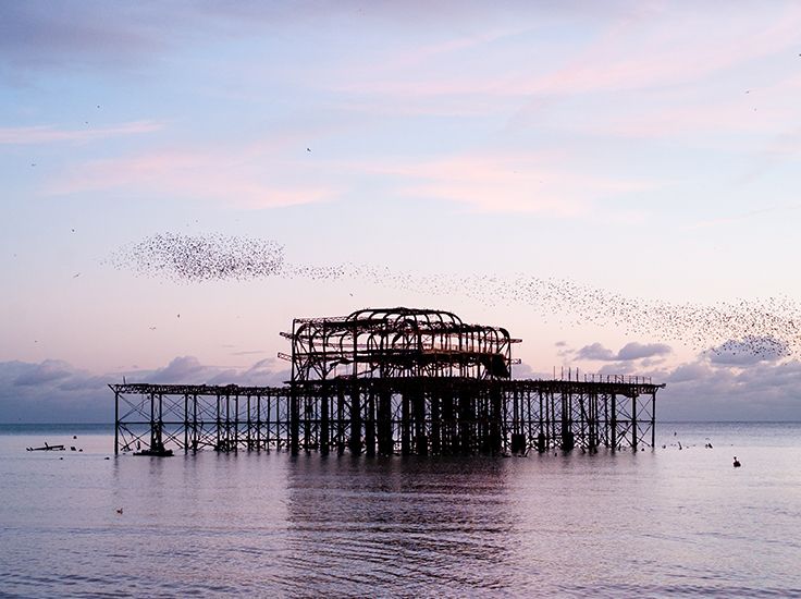 the murmuration of starlings