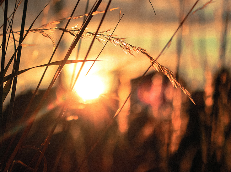 Sunshine through tall grass