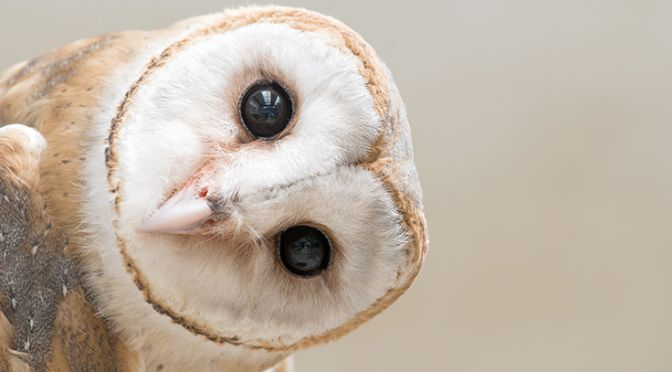 An owl looks out
