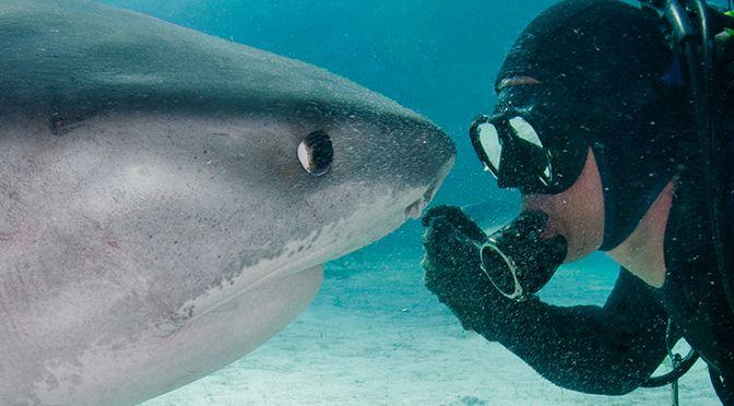 Jim Abernathy with a shark