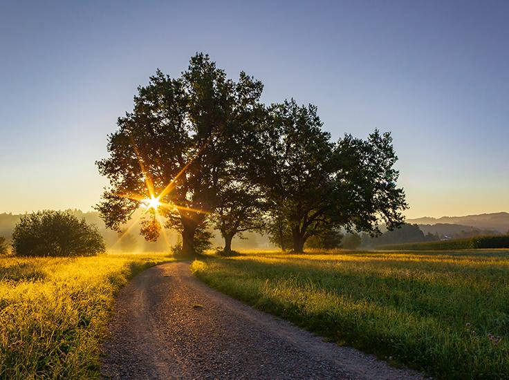 Sunlight in a tree