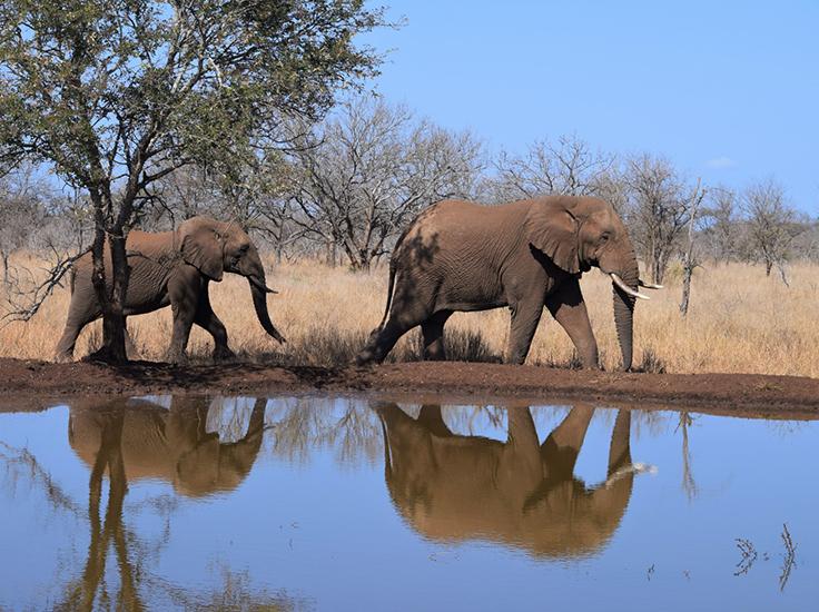 Elephants by Vicky Boult