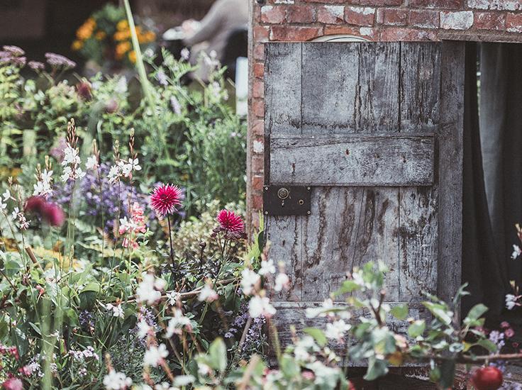 Wildflowers in a back garden