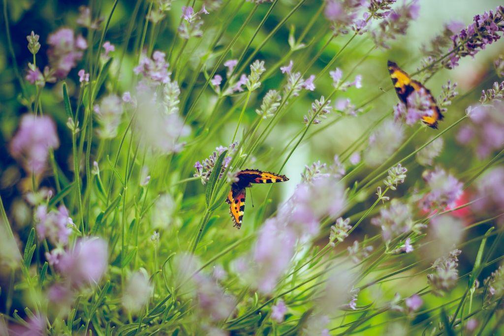 Wildflowers with butterflies. Photo by Emiel Molenar.