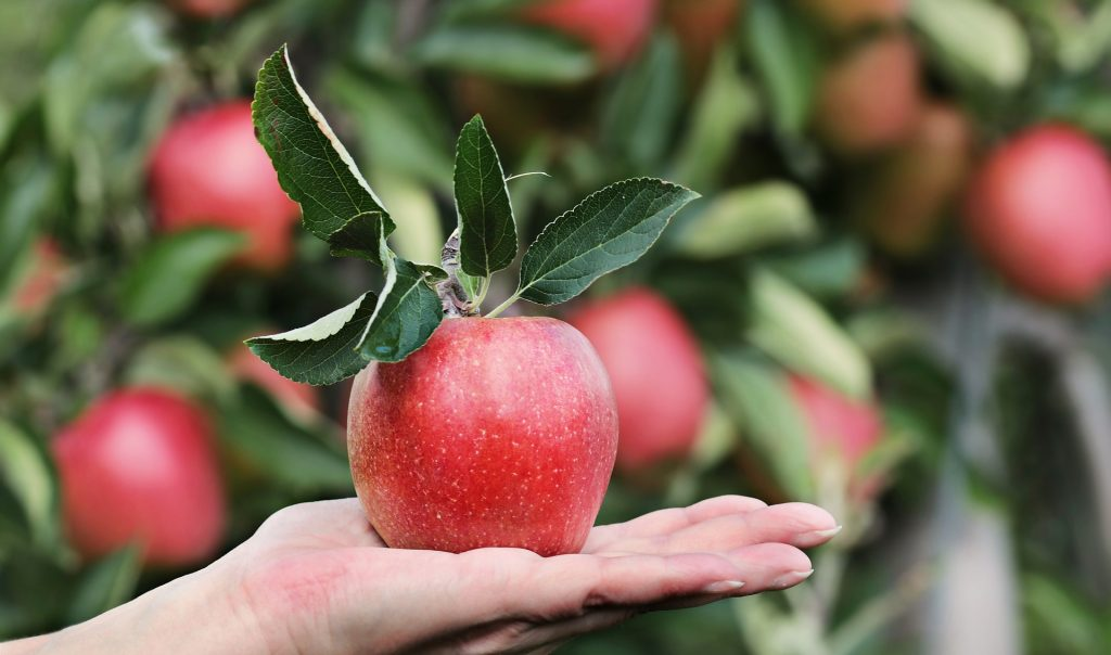 Apple on the palm of a hand