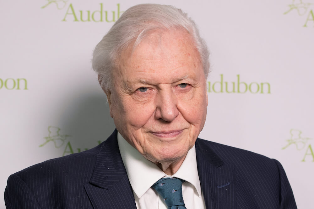 Sir David Attenborough Brings Perfection to a Most Imperfect Year