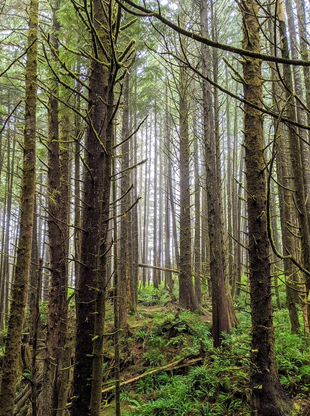 Forest Preservation