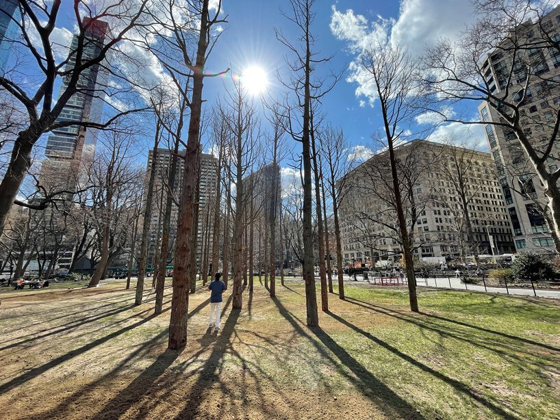 Maya Lin Brings Life to Trees Killed By Climate Change In NYC'S 'Ghost Forest' Installation