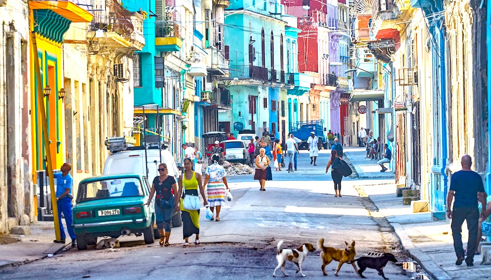 It Took Decades, But Communist Cuba Now Has Its First Animal Welfare Law