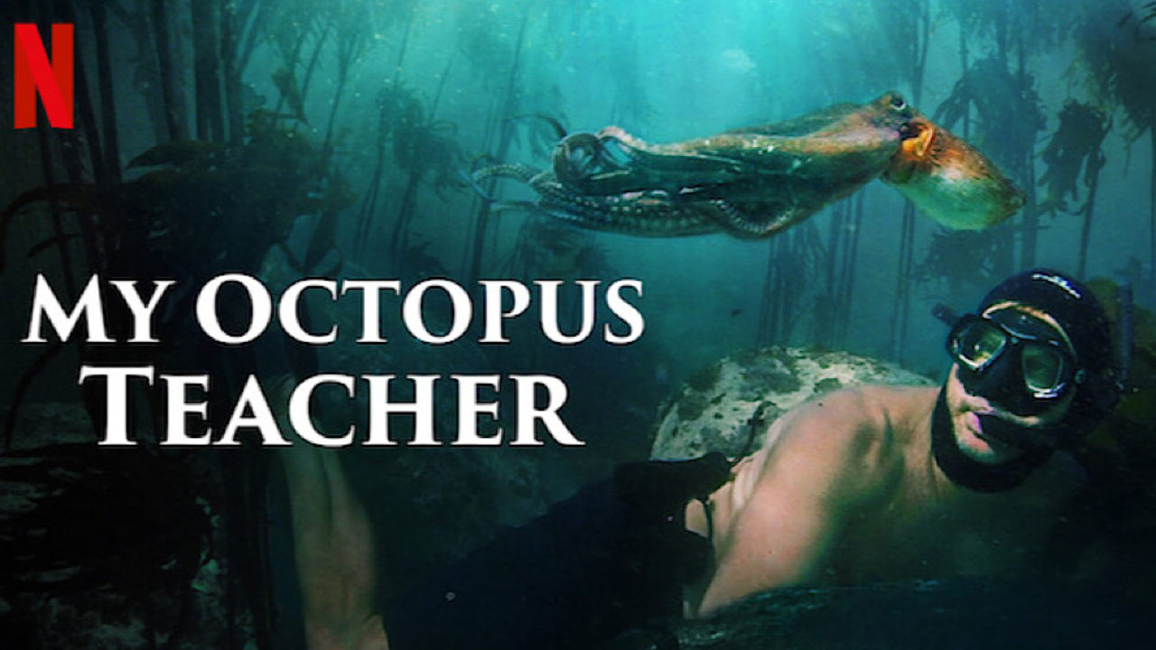'My Octopus Teacher' Wins Oscar for Best Documentary Feature