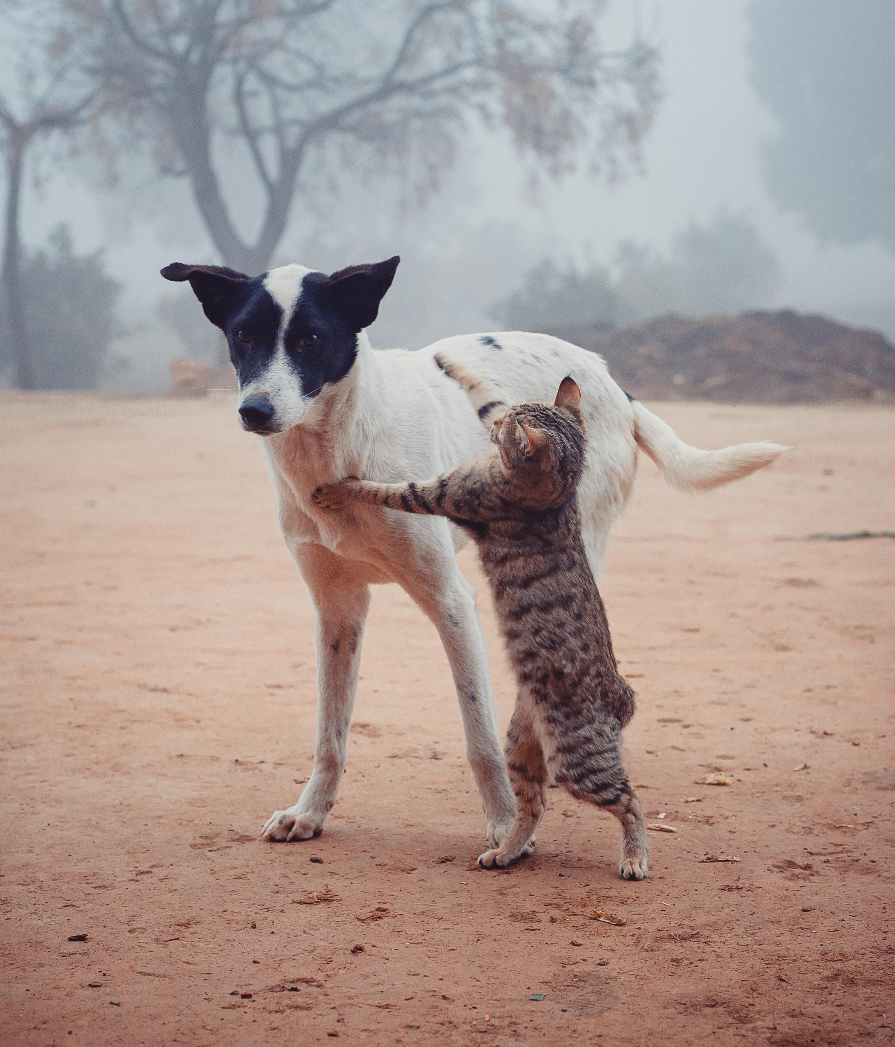 stray cat and dog