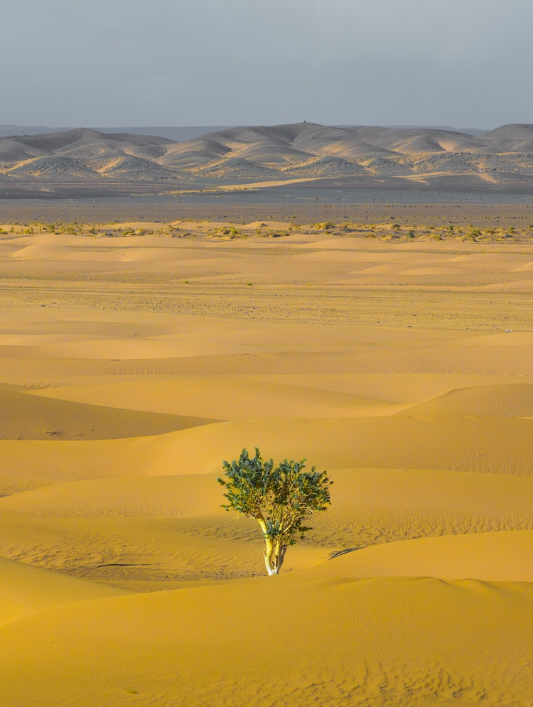 Africa's Great Green Wall Initiative Secures $14 Billion to Plant 3 Million Trees Across the Saharan Border