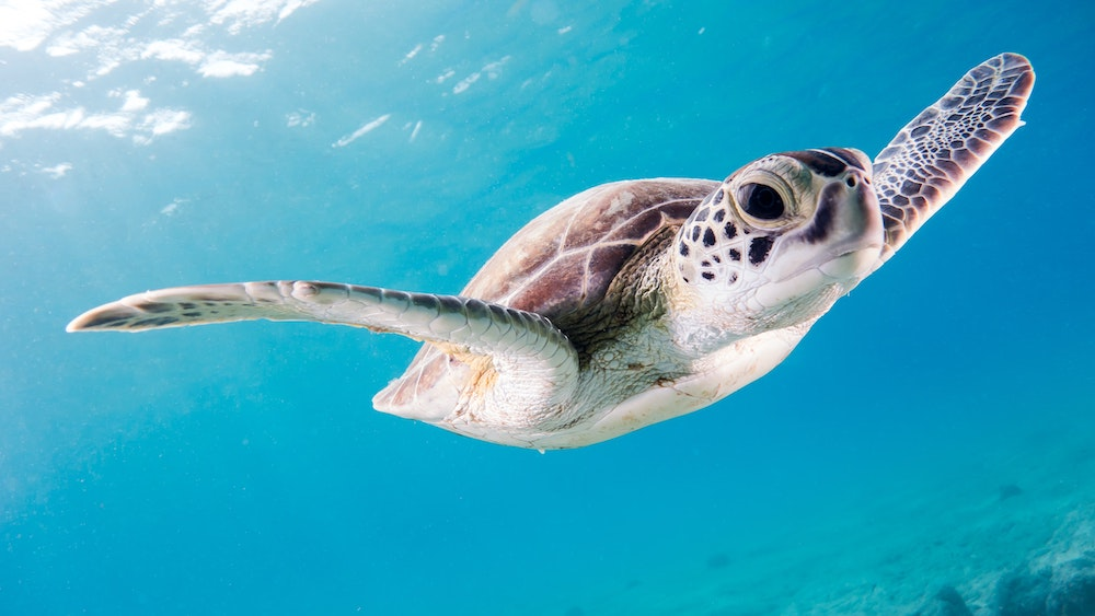 3,500 Endangered Sea Turtles Rescued From Freezing Texas Waters